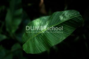 Membuat Background Gambar Menjadi Blur
